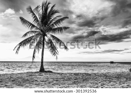 Beautiful beach with coconut, Black and white color - stock photo