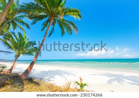 beautiful beach with coconut palm and sea - stock photo