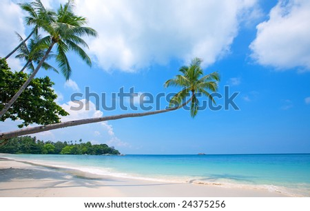 Beautiful beach with crystal clear blue waters and palm trees - stock photo