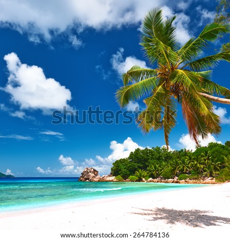Beautiful beach with palm tree at Seychelles, La Digue.  - stock photo