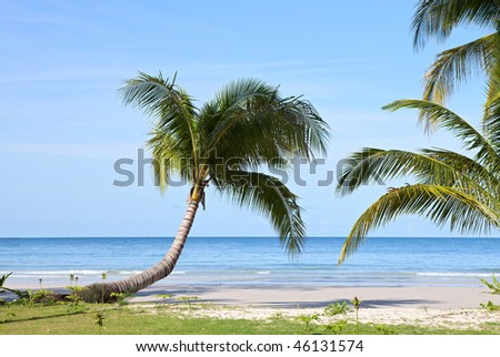 beautiful beach with palm trees, sea and sky