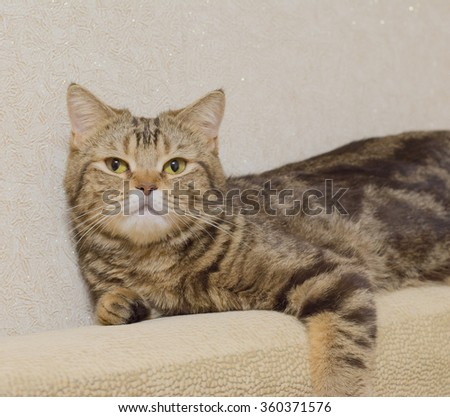 beautiful beige cat posing for a photograph - stock photo