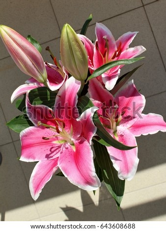 Beautiful big pink lily flower stock photo royalty free 643608688 beautiful big pink lily flower mightylinksfo