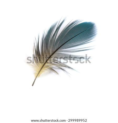 Beautiful bird feathers, Beautiful Macaw feathers. - stock photo