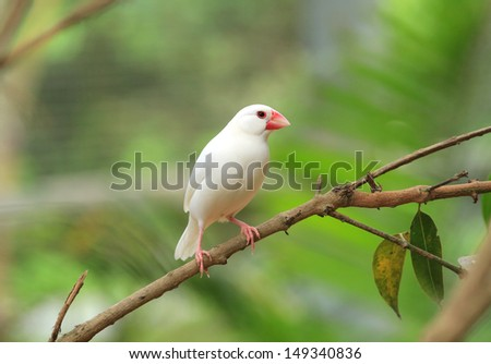 beautiful bird on nature background - stock photo