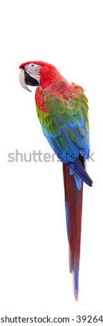 Beautiful bird, Red-and-green Macaw,Greenwinged macaw, parrot isolated on white background. - stock photo