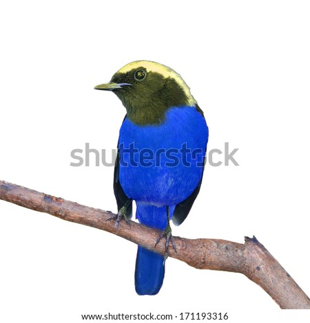 Beautiful bird standing on the branch, white background