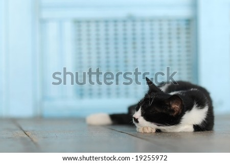 Beautiful black and white cat takes a nap in front of the blue wall - stock photo