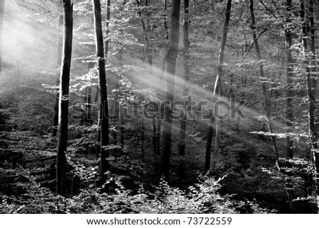 Beautiful black and white ray of light - stock photo