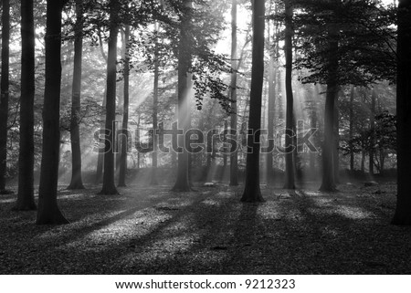Beautiful black and white ray of light. - stock photo