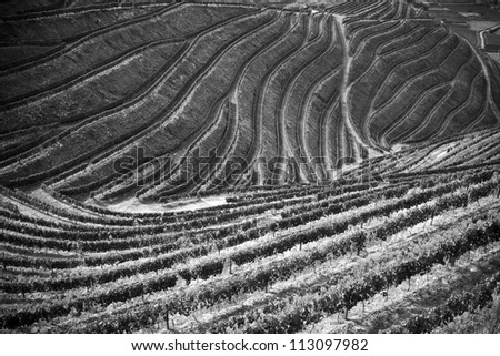 Beautiful black and white vineyards picture of the Douro Valley, Portugal that illustrators the viticulture and heritage - stock photo