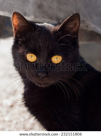 beautiful black cat in the sun in the courtyard - stock photo