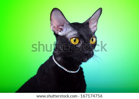 Beautiful black cat is isolated on a green background. - stock photo