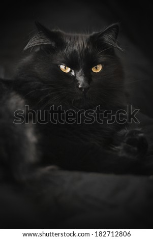 Beautiful black cat on a black background selective focus - stock photo