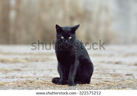 Beautiful black cat on the street - stock photo
