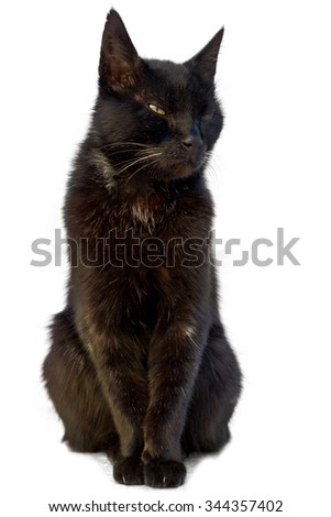 Beautiful black cat sitting and looking sleepy on a white background - stock photo