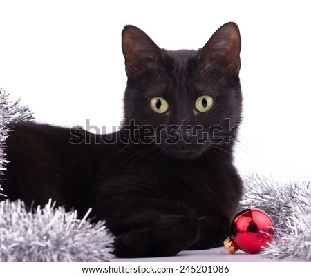 Beautiful black cat with a red bauble and silver tinsel, looking at the viewer - stock photo