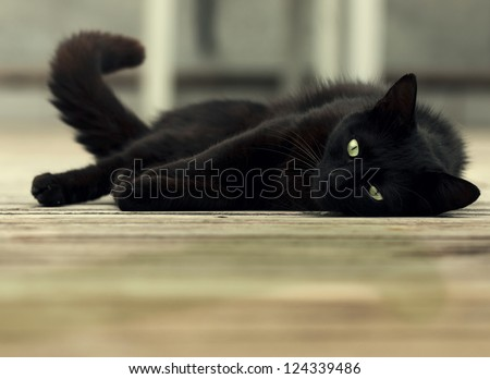 beautiful black cat with green eyes lying on wooden floor - stock photo