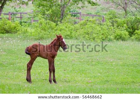 beautiful blond foal grazes in field - stock photo