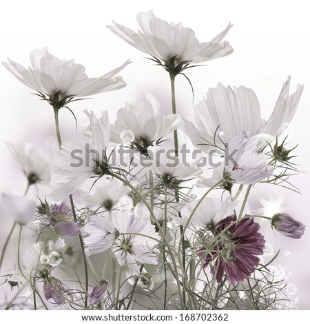 Beautiful blooming garden flowers.Floral card - stock photo