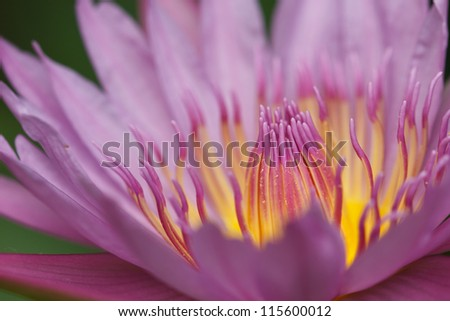 Beautiful blooming lotus patterns and bright colors - stock photo