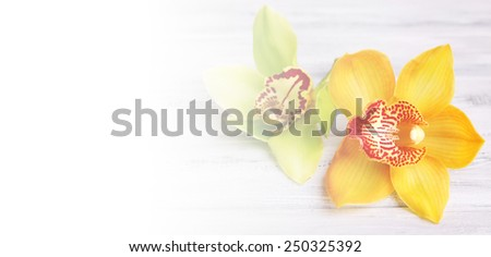 Beautiful blooming orchid on light background - stock photo