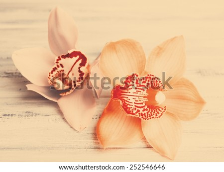 Beautiful blooming orchid on wooden background - stock photo