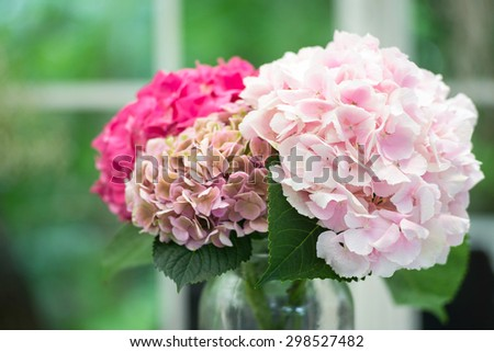 Beautiful Blooming Pink Shade Flower in Glass Jar - stock photo