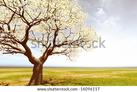 Beautiful blossoming tree - stock photo