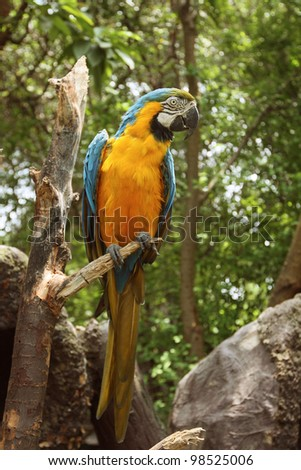 Beautiful Blue and Gold Macaw - Parrot Portrait - stock photo