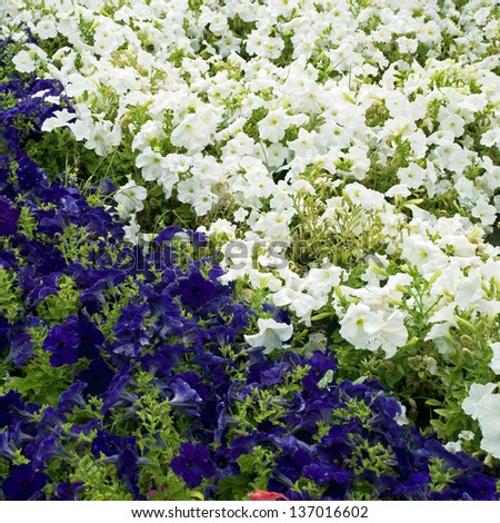 Beautiful blue and white flowers