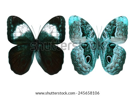 Beautiful blue butterfly isolated on white background - stock photo
