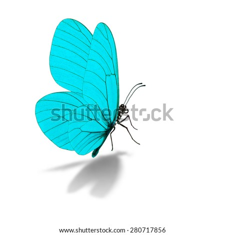 Beautiful blue butterfly, isolated on white background - stock photo