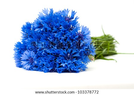 Beautiful blue cornflower - stock photo