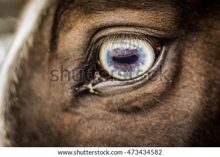 Beautiful blue eyed horse, close up