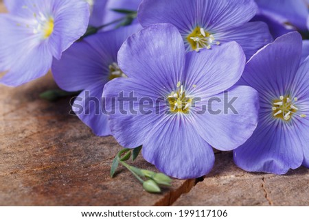 beautiful blue flax flowers macro on an old wooden board. horizontal  - stock photo