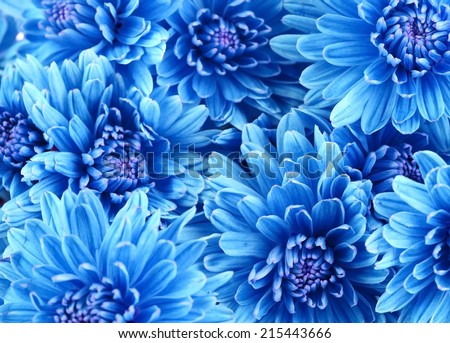 Beautiful blue flowers, close-up - stock photo