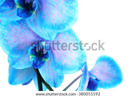 Beautiful blue orchid flower isolated on white background - stock photo