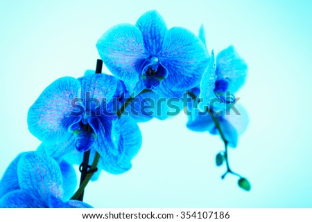 Beautiful blue orchid on blue background - stock photo