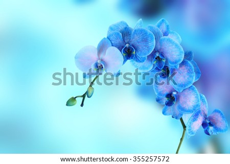 Beautiful blue orchid on blue background with space for text - stock photo