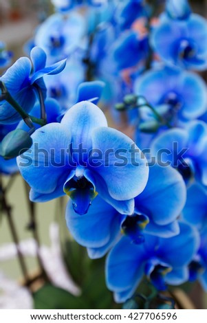 Beautiful blue orchid on flower show - stock photo