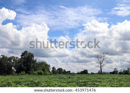 Beautiful blue sky with clouds for background and bright lighting clear on Summer and green forest Cassava plantation bottom - stock photo