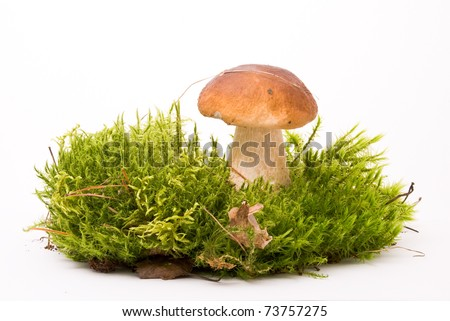 Beautiful boletus mushroom on moss. Isolated on studio white background - stock photo