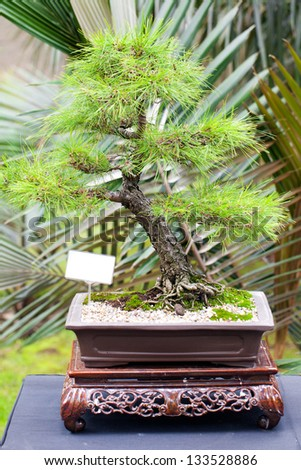 beautiful bonsai in a botanical garden - stock photo