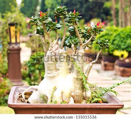 beautiful bonsai in thailand - stock photo