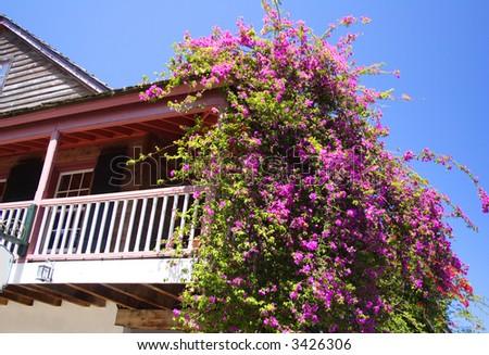 Beautiful bougainvillea on a balcony and blue sky - stock photo