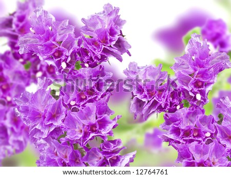 Beautiful bouquet from lilac gentle and fragile flowers - stock photo