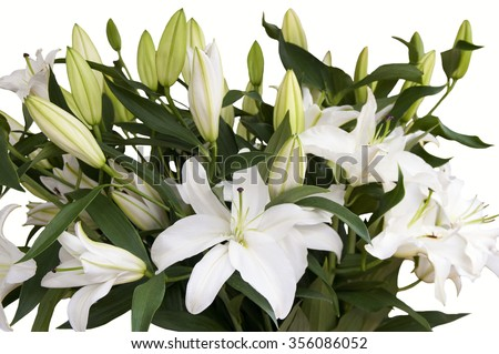 Beautiful bouquet from white lilies on a white background - stock photo