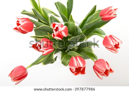 Beautiful bouquet of bright tulips. Isolated on a white background.