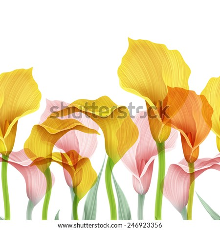 Beautiful bouquet of calla lilies. Isolated on white background, yellow and pink color flowers. - stock photo